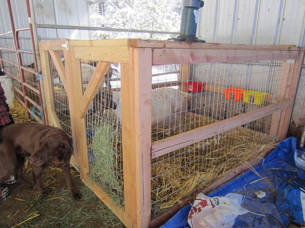 Goat Kidding Stalls Quartz Ridge Ranch
