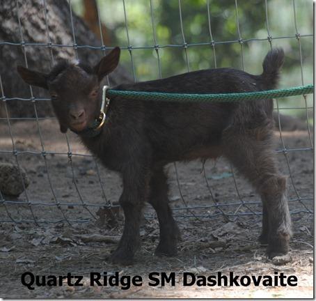 QRR-SM-Dashkovaite